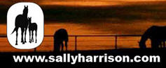 Sally Harrison Blog